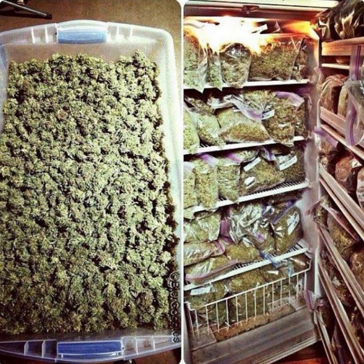 Холодильник с марихуаной конопля рубаха